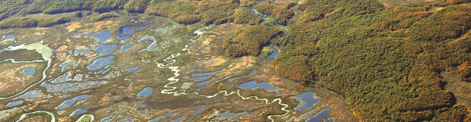 Contributing to the conservation and sustainable use of Tierra del Fuego peatlands cropped