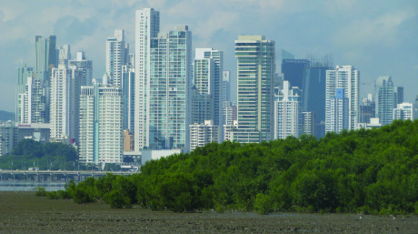 Even in rural environments, such as in Panama city (Panama)mangroves may provide imprtant protection to people and infarstructure. By Sander Carpay