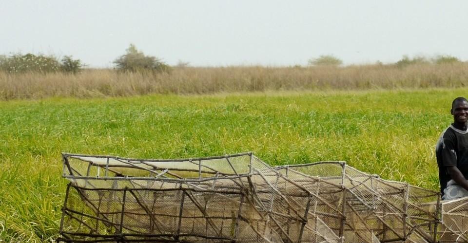 Inner Niger Delta fisherman