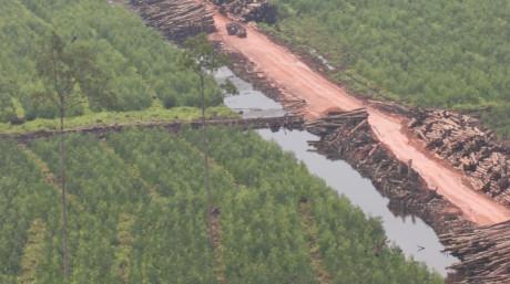 Logs, drainage chanel, Acacia plantation_Reza_3