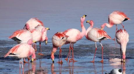 Puna Flamingos by Omar Rocha