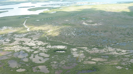 Restoration at Little Pine Island Wetland Mitigation Bank (USA)