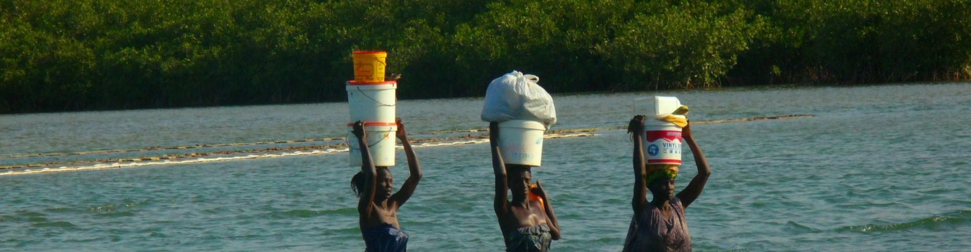 mangroves; livelihoods