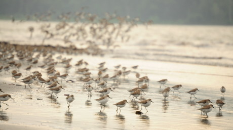 Waders in Colombia
