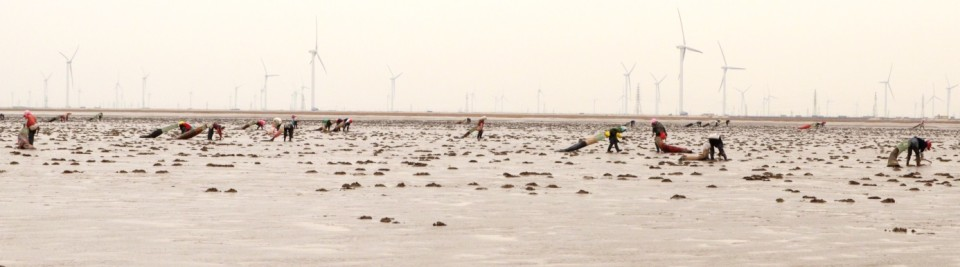Shellfish collectors on the mudflats of the Yellow River Delta