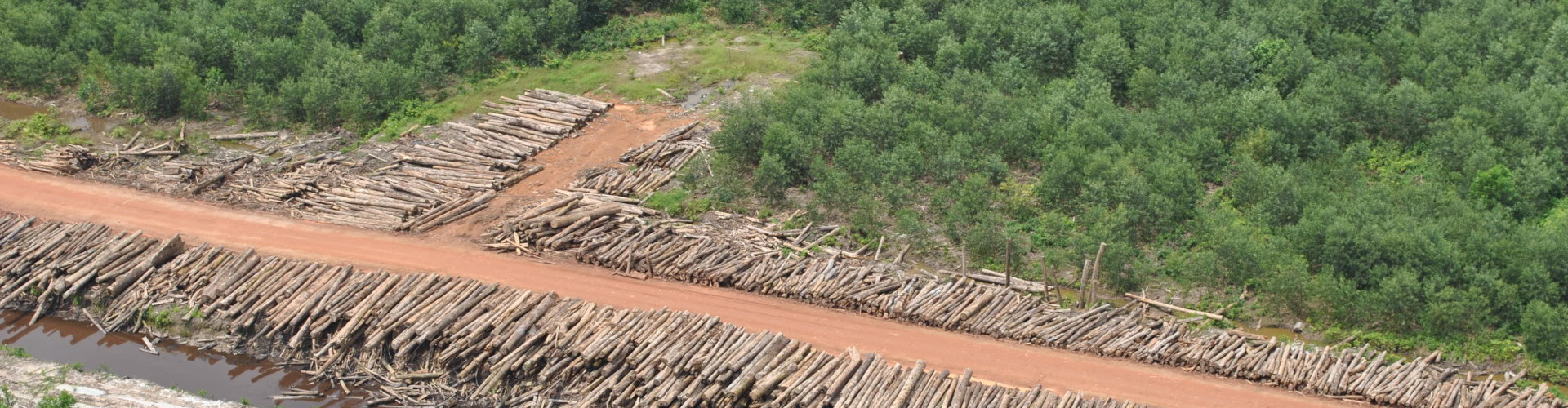 Logs, drainage chanel, Acacia plantation_Reza