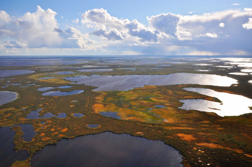 Wetlands in Western Siberia. Photo by Andrey Sirin.