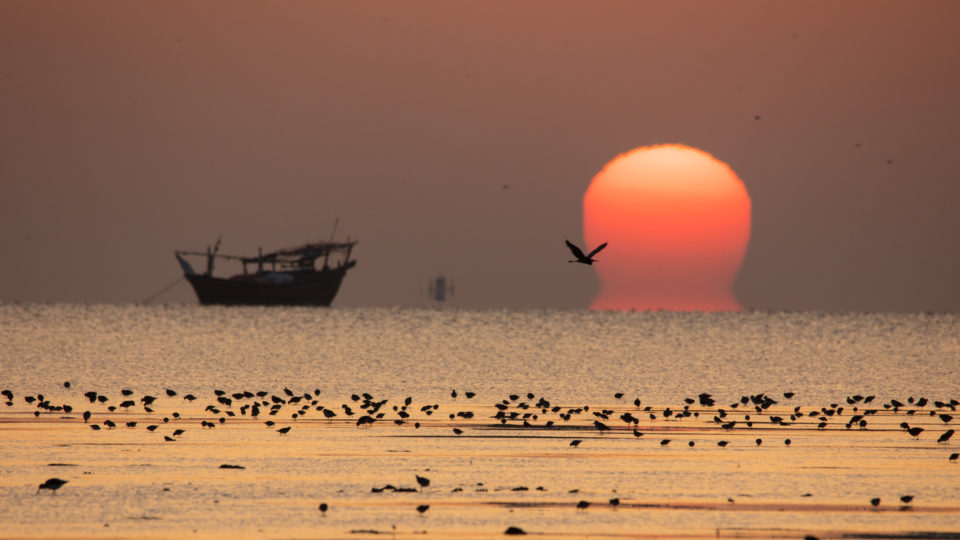 Sunset with a boat and waterbirds
