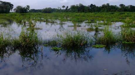Flooding surrounds plants in Indonesia