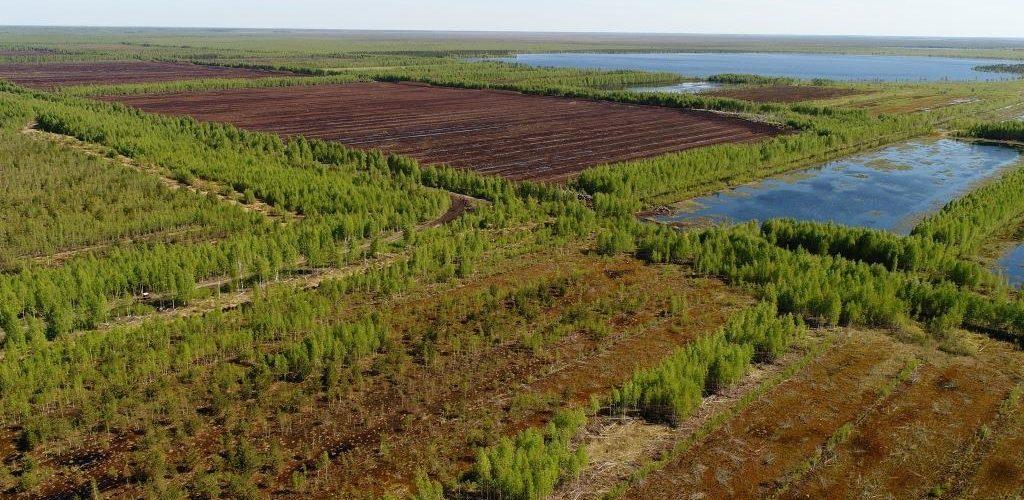 Peatland landscape in Russia