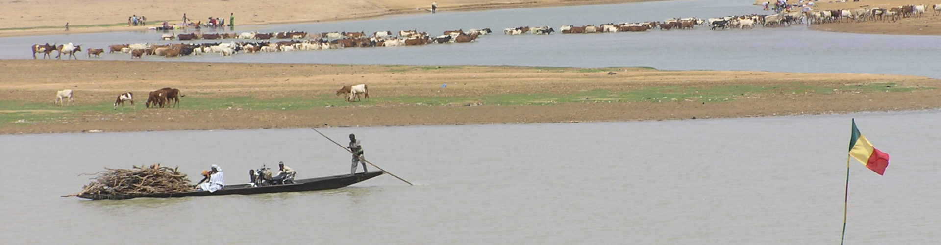 cattle crossing the river in Mali.