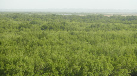 An aerial view of mangrove forest stretching for water in the foreground into haze in the background