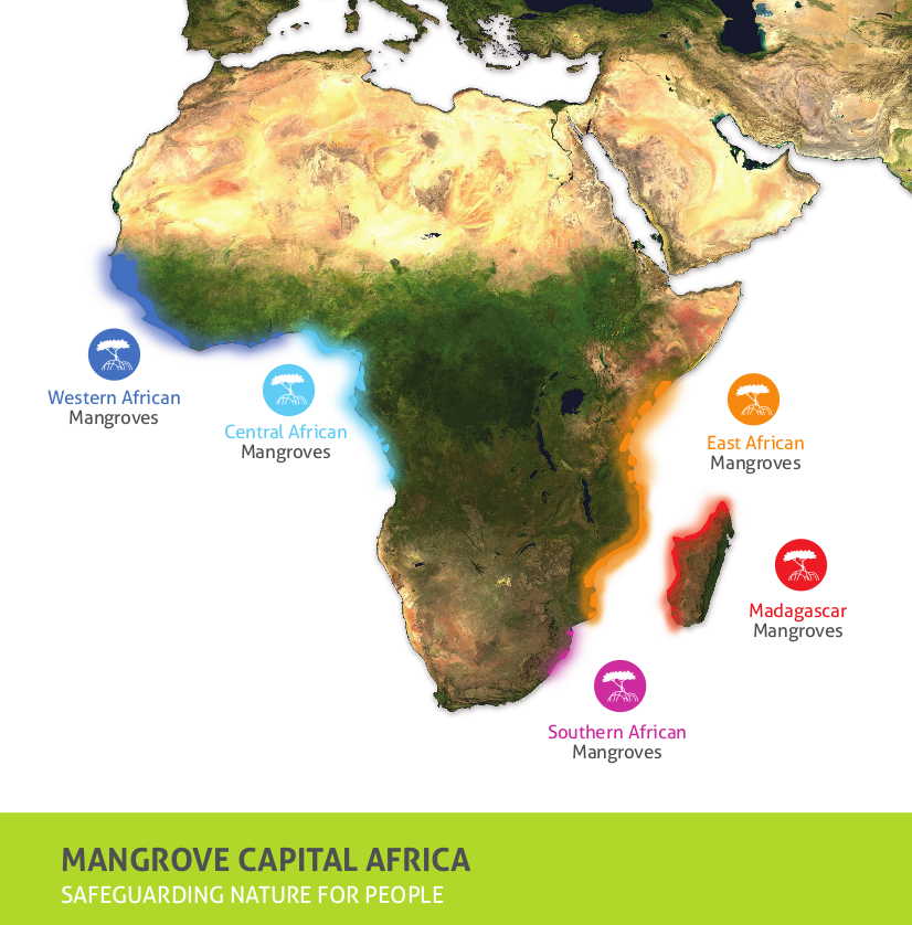 A satellite map of Africa showing mangrove 'hotspots'
