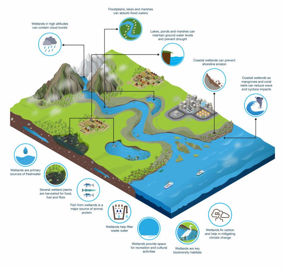Diagram of wetland natural cycles